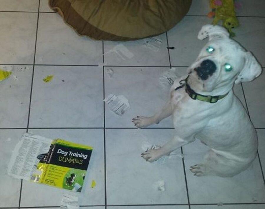 cane libro distrutto