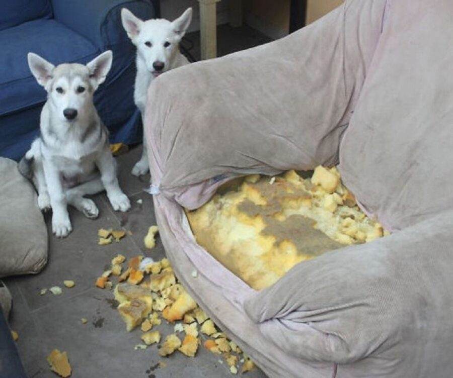 poltrona distrutta cuscino