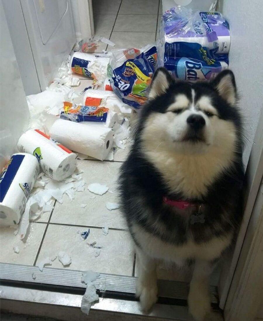 cane carta sparpagliata