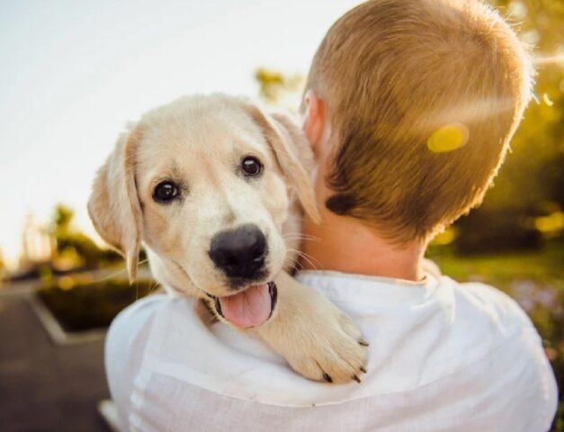 cani che vengono adottati prima volta