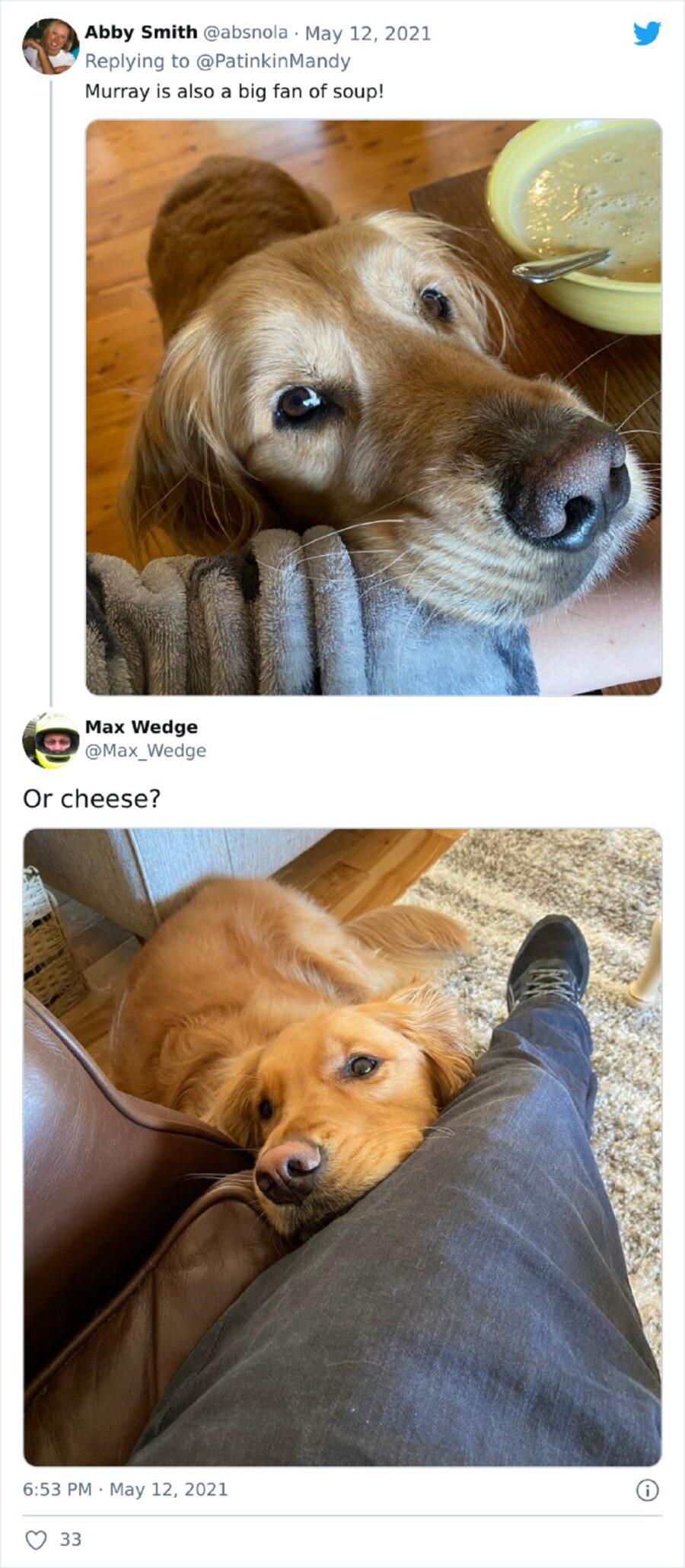 cane adorabile pappa