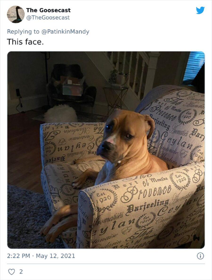 cane buffo seduto