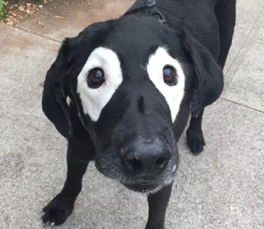 cane pelo attorno agli occhi