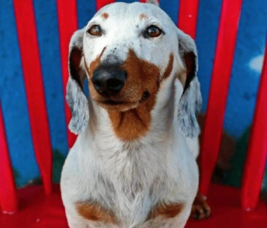 cane sfondo rosso blu