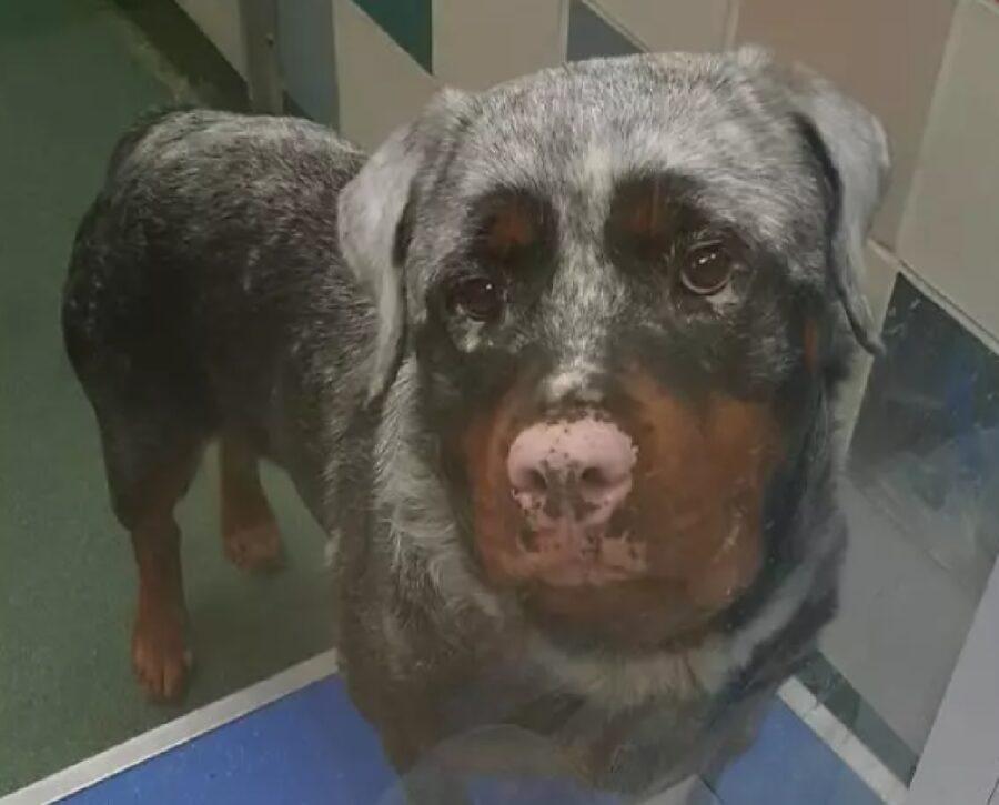 cane sguardo intenso amore