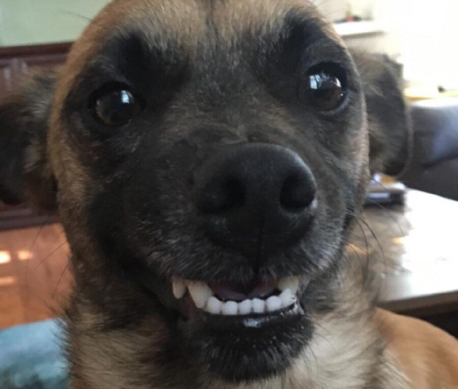 cane sorridere non è il suo forte