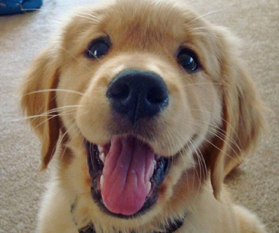 cucciolo classica espressione di gioia