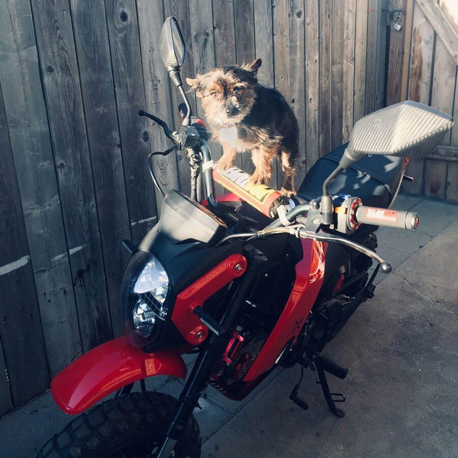cane pronto partire