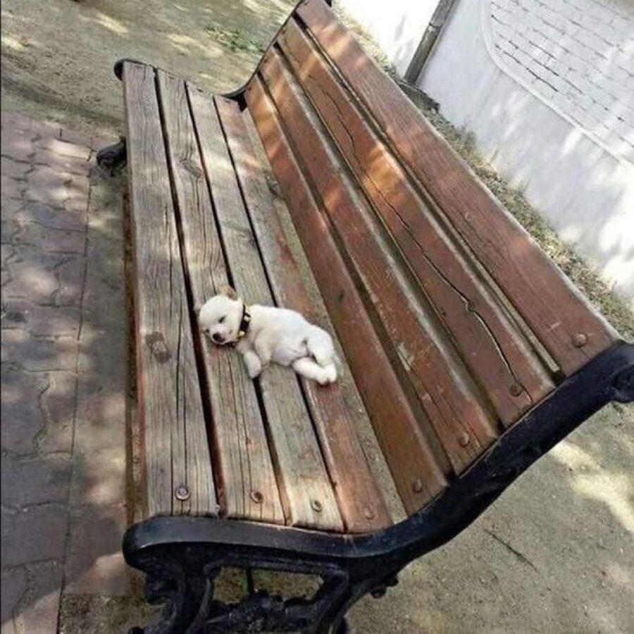 cucciolo panchina legno