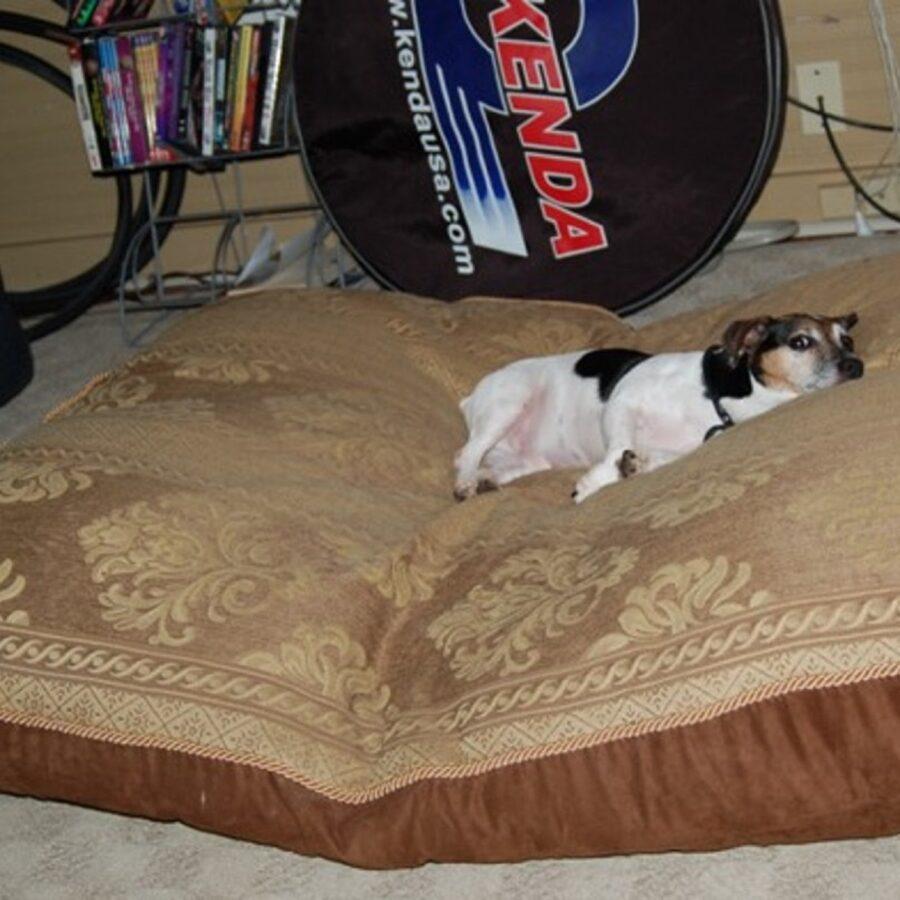 cane cuscino morbido
