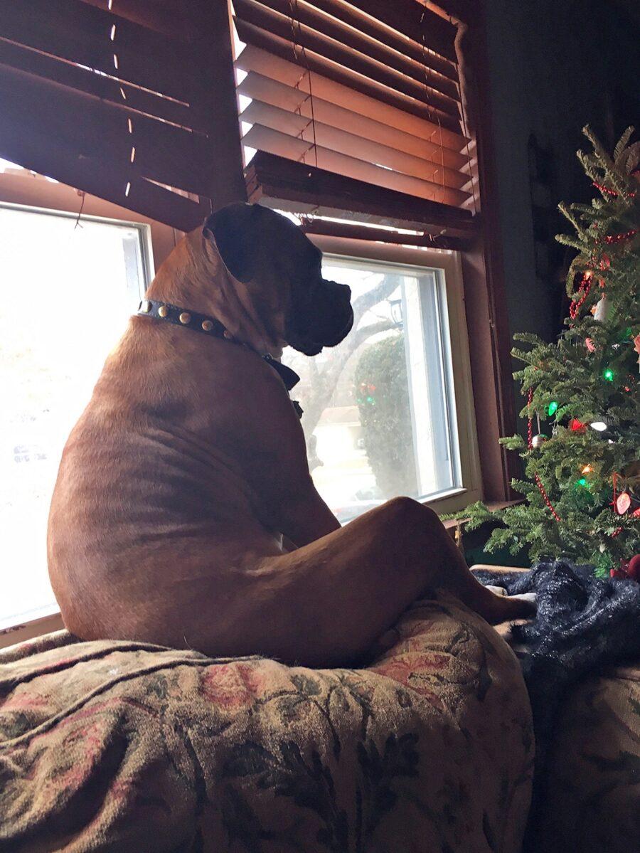 cucciolo cane seduto