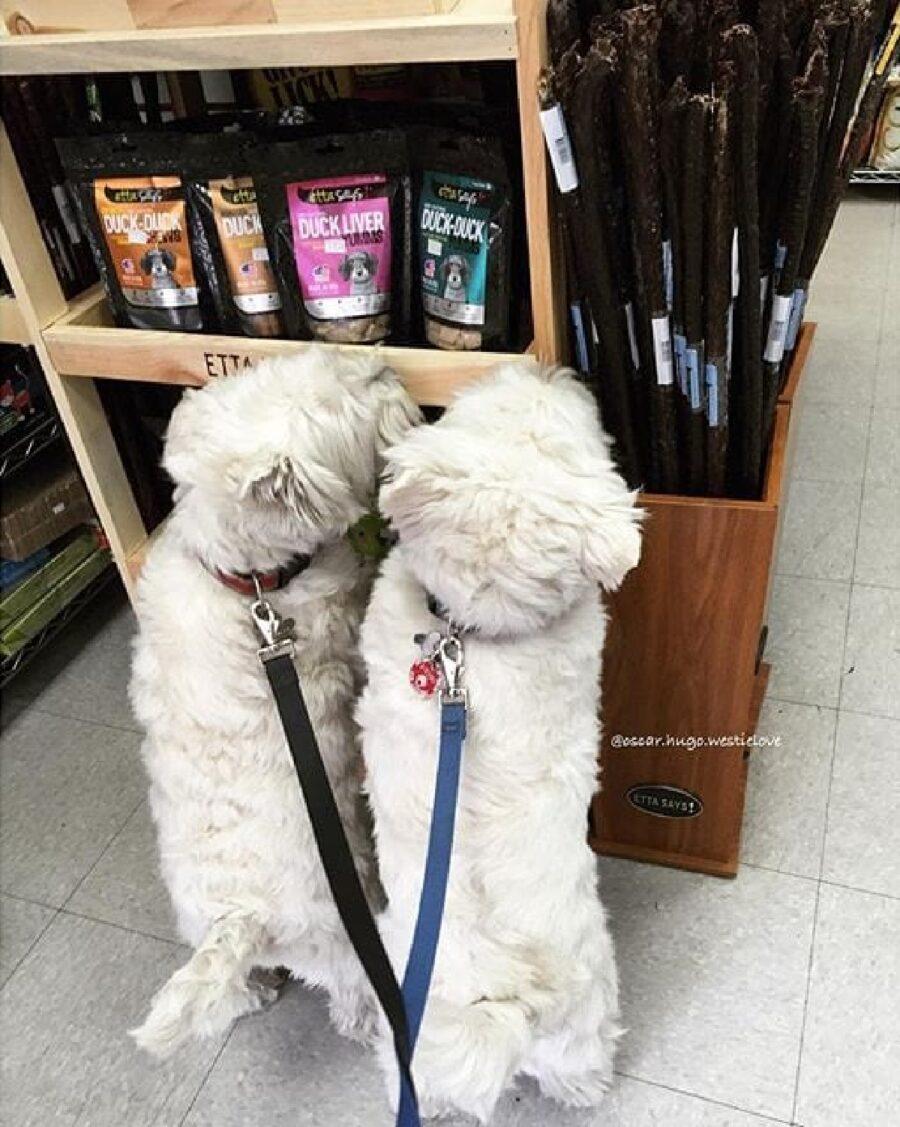 supermercato negozio cani
