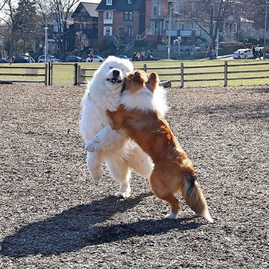 cuccioli recinto abbraccio