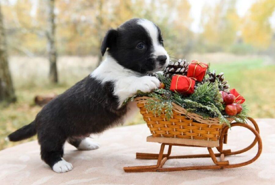 cuccioli dietro slitta fiori