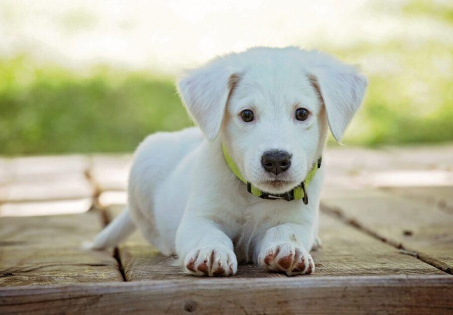 foto di cuccioli che non sanno di essere i più belli del mondo