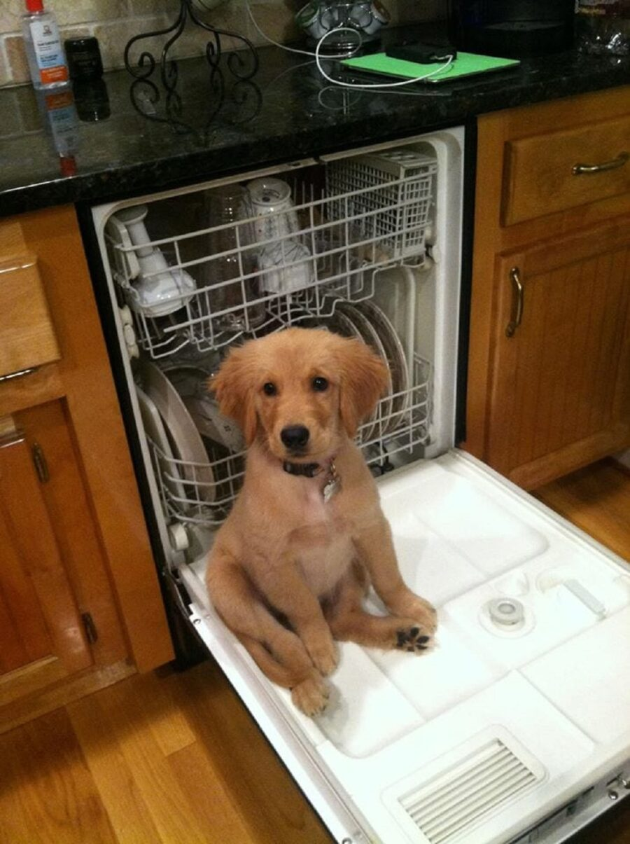 cucciolo lavastoviglie seduto