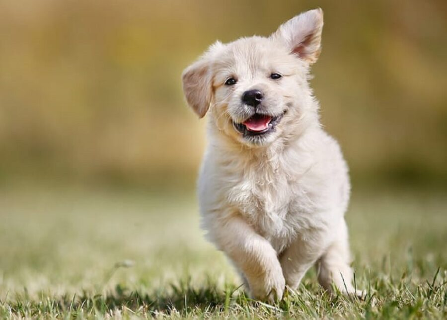 cane corre erba