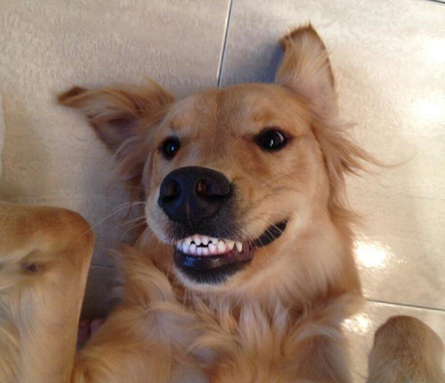 dolcissimo sorriso cane