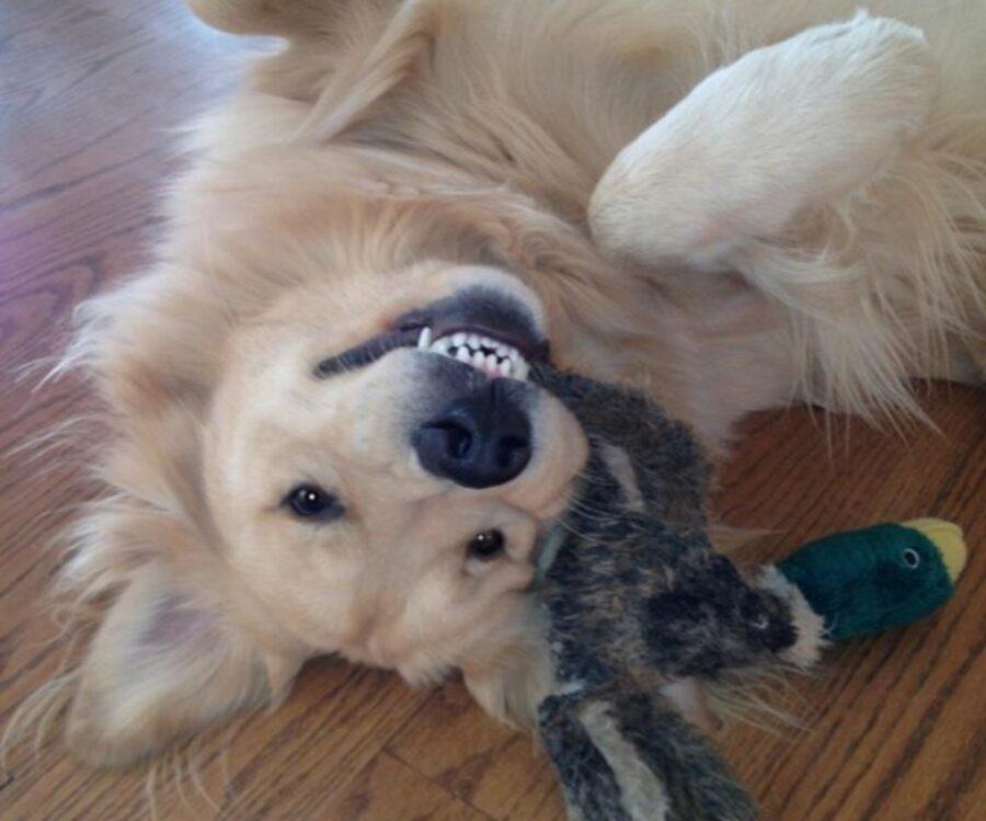 cane vuole giocare