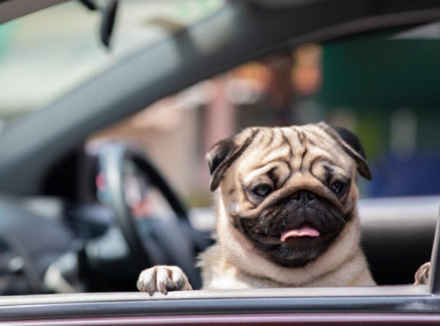 cucciolo seduto posto macchina
