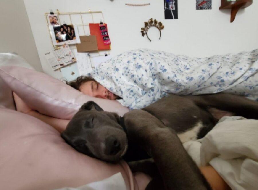 cane si addormenta letto