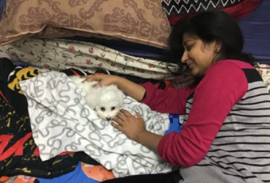 cane amore a prima vista donna