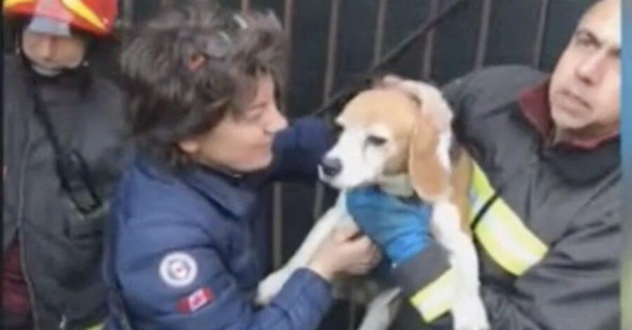 cane salvato dai vigili del fuoco ad Agliè