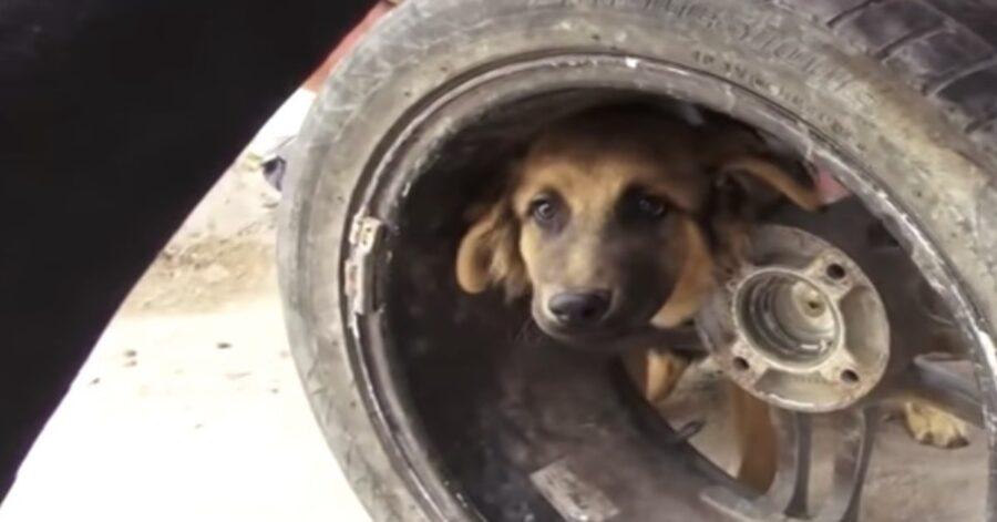 cane incastrato in una ruota