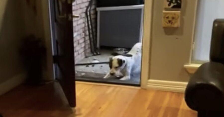 cane adottato ha paura di entrare in casa