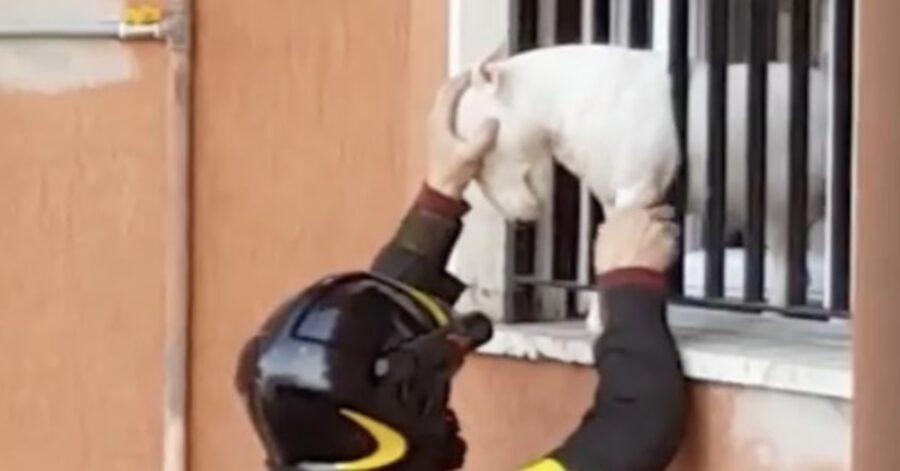 vigile del fuoco salva Bull Terrier che sta per cadere nel vuoto