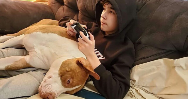 Pitbull che dorme con un bambino
