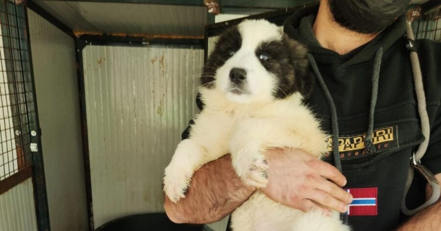 cucciolo in braccio