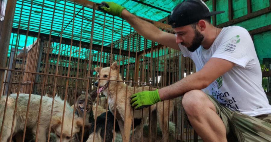 Cani salvati da volontario