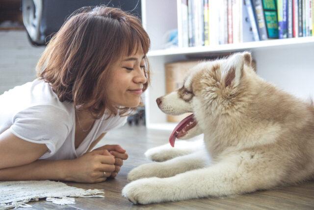Cucciolo di cane con una ragazza