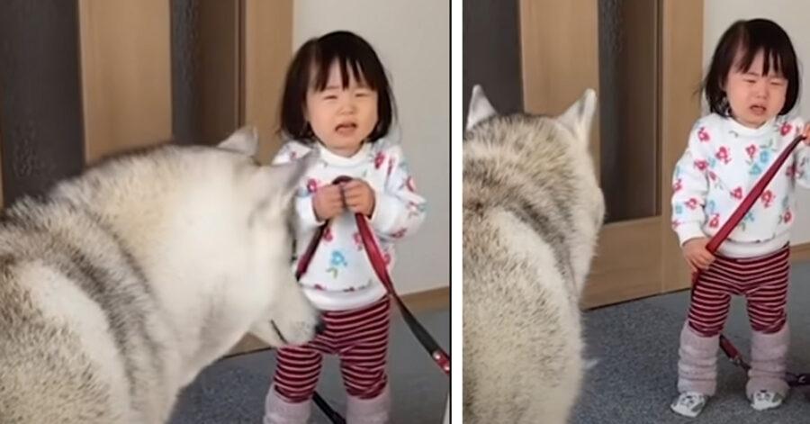 Cane insieme ad una piccola bambina