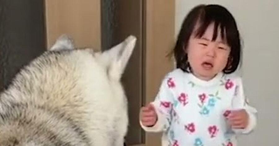 Cane che osserva una bambina che piange