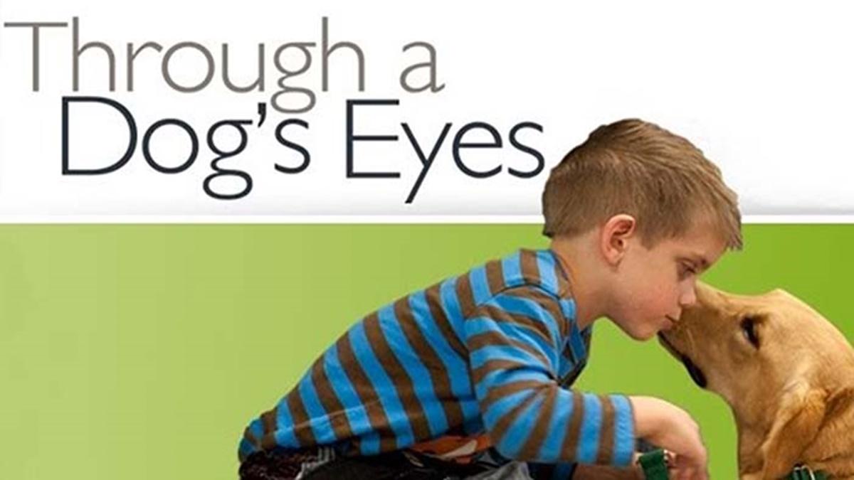 through a dog's eye