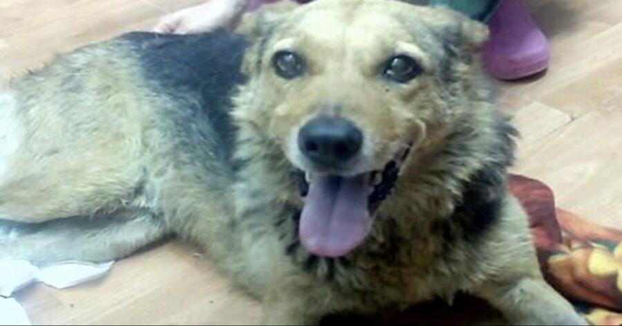 cane disabile salvato dall'OIPA di Andria