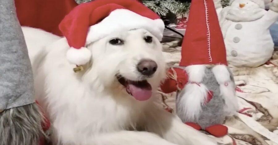 cane bianco a Natale