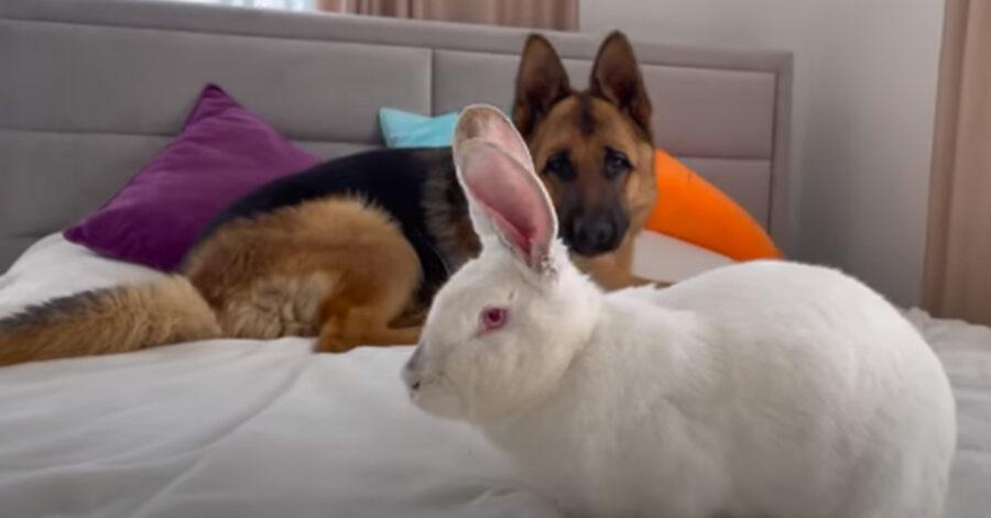 Cane insieme a un coniglio