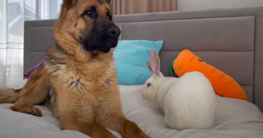 Cane vicino a un coniglio
