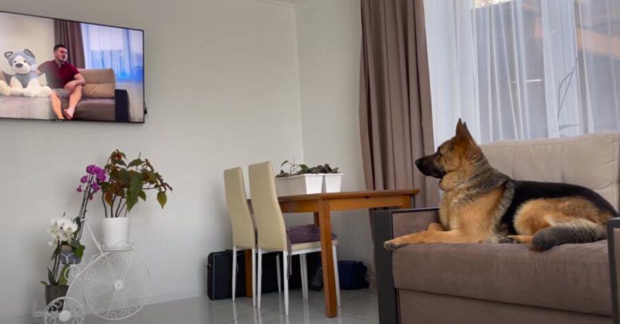 Cane sul divano che guarda la tv