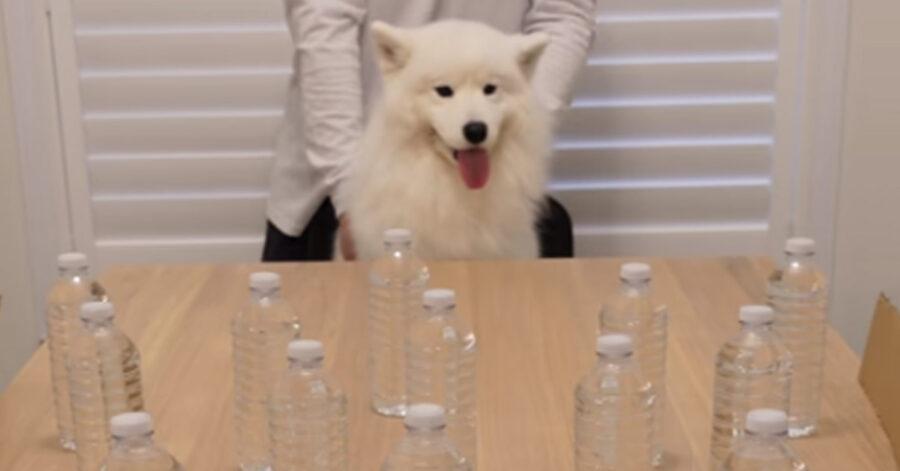 Cane guarda delle bottiglie