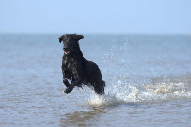 Cane felice al mare