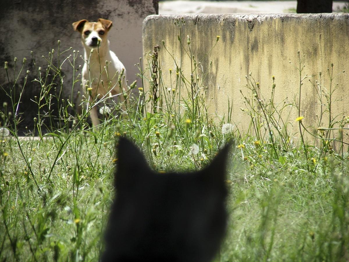 cane osserva gatto