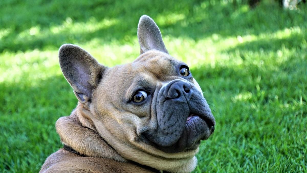 cane in dubbio