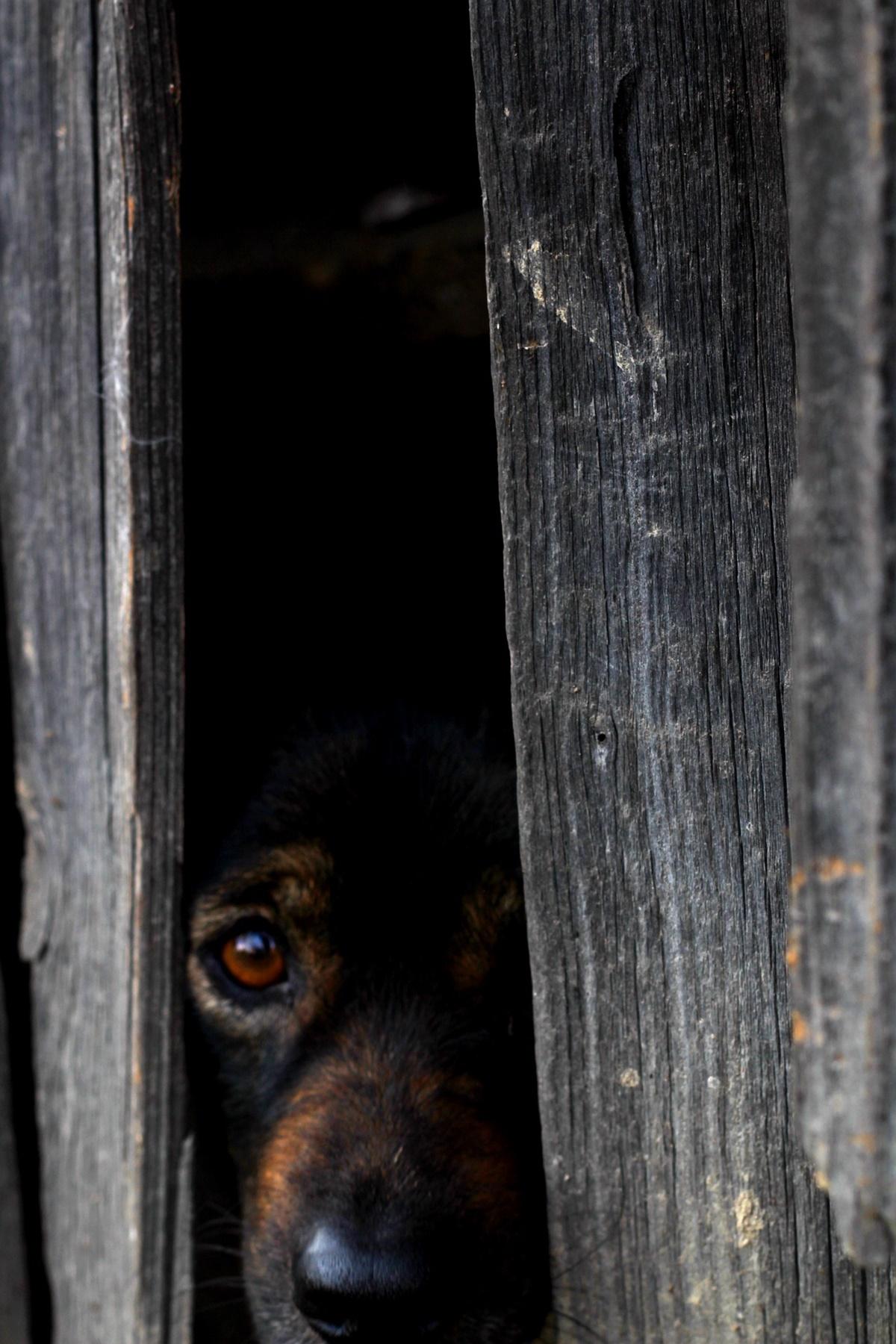 cane si nasconde nel buio