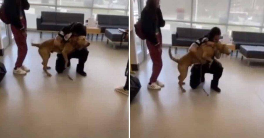 Cane abbraccia un uomo