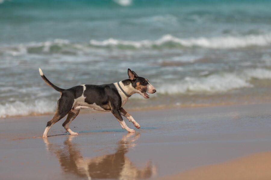 Cane che corre in riva al mare