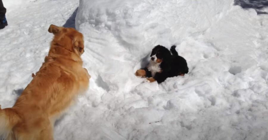 Due cani giocano nella neve